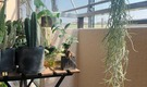 渋谷、横浜、中目黒近!植物とロハスな生活を。人々が集うサロンド綱島 家賃45,000円!