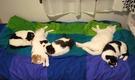 第2弾★猫と暮らして社会貢献 東京で保護猫の ねこシェアハウス299(女性専用)