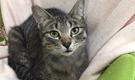 猫のいるシェアハウス「living cat's 武蔵関」 猫のお世話をしながら、保護活動