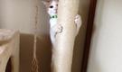 京都で猫と一緒に暮らしましょう
