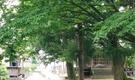 【メンバー募集!】海・里山・清流!新潟県の胎内市にシェアハウスを作るプロジェクト