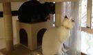 広島で猫と楽しく暮らしましょう(女性専用)