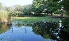 西荻窪で暮らす。木の香りが心地よいコンセプトハウス。自然好きが集う!
