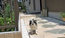 犬同居型女性専用 ドッグラン付一軒家でワンたちと暮らせます ペット可賃貸ルームのご紹介