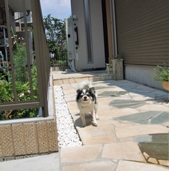 犬同居型女性専用シェアハウス!ドックラン付一軒家でワンたちと暮らせます       出張時はオーナーがペットシッターします