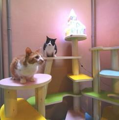 猫の飼えるシェアハウス