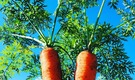 【神奈川県秦野市】農のある暮らしで、都心に近い田舎暮らしを楽しむシェアハウス!
