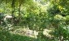 Organic garden, Environmental awareness, Meditation, Yoga