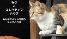 みんなで猫と暮らすコレクティブハウス