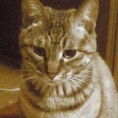 女性限定の保護猫ボランティアシェアハウス