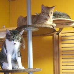 猫大好き家族のためのシェアハウス?シェアレジデンス?