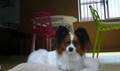 ペットと一緒に生活できるシェアハウス HOUSE-ZOO壱番館