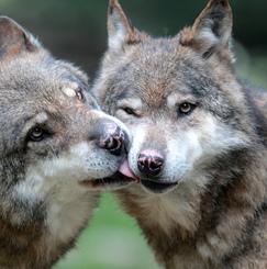 人狼ハウス