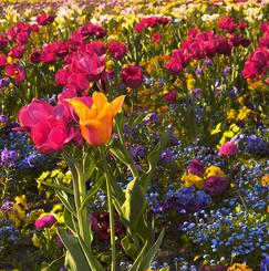 花とハーブと果樹のある自然にも人にもやさしいオーガニックなナチュラルシェアハウス