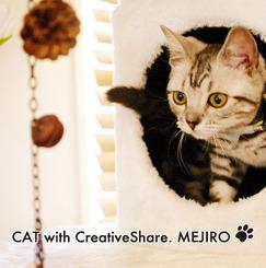 【猫と住めるシェアハウス】東京都目白。猫好きの男女が集まる猫と暮らせるシェアハウス。駅徒歩2分