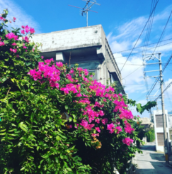 沖縄で女子クリエイターの集まるシェアハウス兼Airbnbをやりたい!