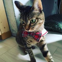 猫のいるシェアハウス「living cat's 武蔵関」 猫のお世話をしながら、保護活動【キャンペーン中!】