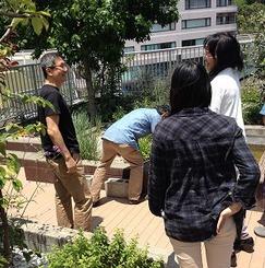 屋上菜園が充実、収穫も世話も共に楽しむ~コレクティブハウス横浜(仮称)