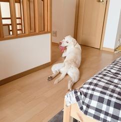 【新宿アクセス便利】屋根裏部屋女子1名様、まかない付きシェアハウス