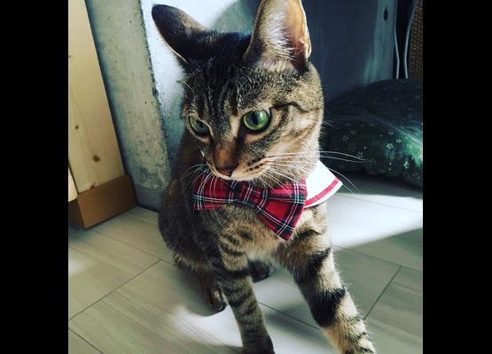 猫のいるシェアハウス living cat's