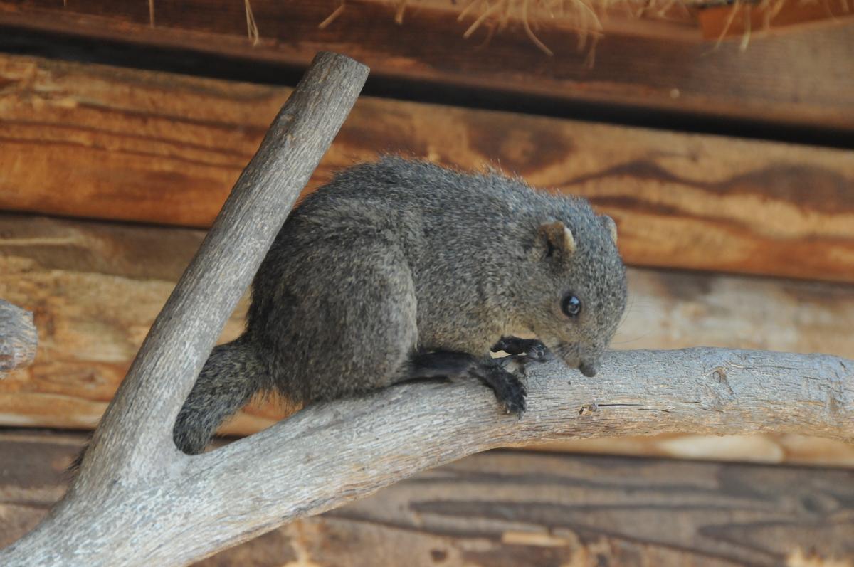 shimin-fureai-sato-squirrel-park.jpeg