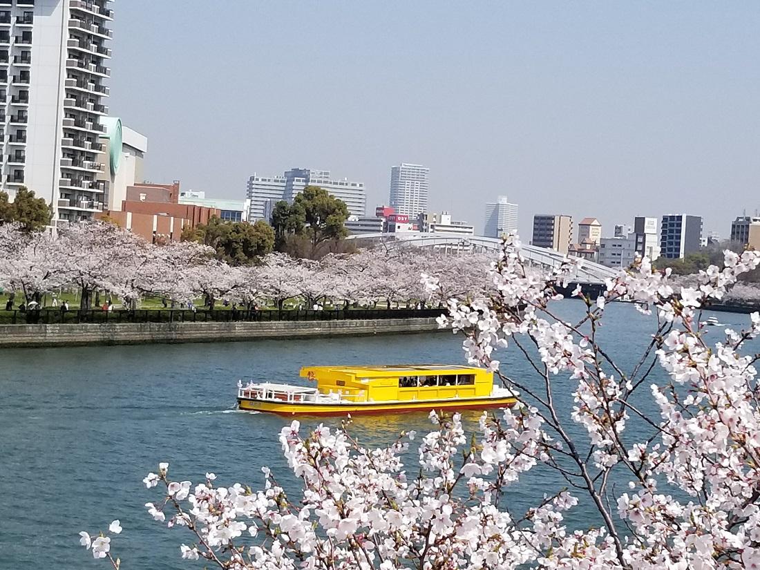 sakura-cruise-rakugoka.jpg