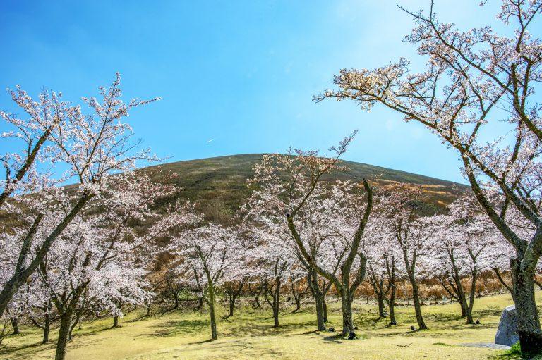 sakura-no-sato-sakura-village