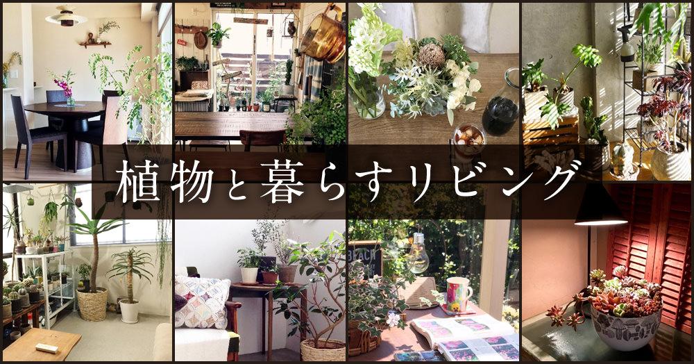 『植物と暮らすリビング』コンテスト