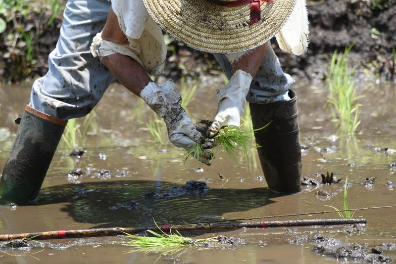副業で農業はできる?稼ぐ方法とおすすめの農作物、メリットやデメリット