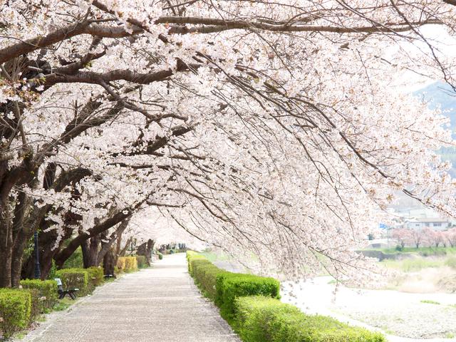 Hysteric Blue【春~spring~】歌詞の意味を解釈!別れの季節を好きになる方法がある?の画像