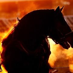 馬神のアイコン