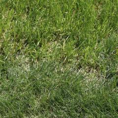 紫吹蘭のアイコン
