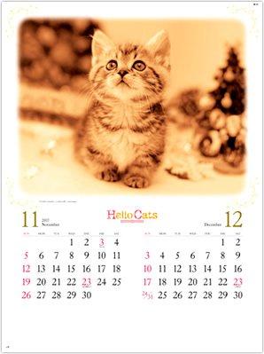 画像:11-12月 上を見上げてる子猫 ハローキャッツ 2017年版カレンダー