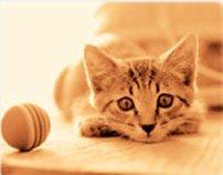 画像:3-4月 カメラに興味津々な子猫の写真 ハローキャッツ 2017年版カレンダー