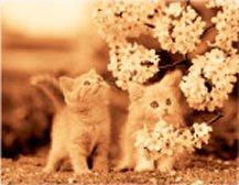 画像:5-6月 初めて見る花と2匹の子猫 ハローキャッツ 2017年版カレンダー