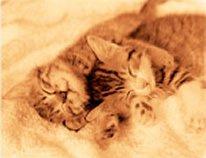 画像:9-10月 すやすや気持ちよさそうに眠る2匹の子猫の写真 ハローキャッツ 2017年版カレンダー