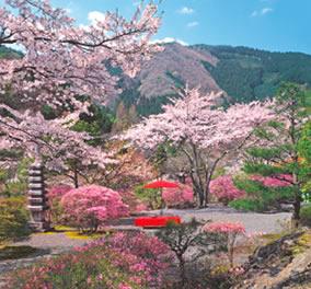 画像:京都府白龍園の写真/3-4月 庭(フィルムカレンダー) 2017年版カレンダー