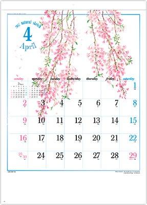 画像:4月 八重紅枝垂桜 ナチュラルスケッチ 2017年版カレンダー