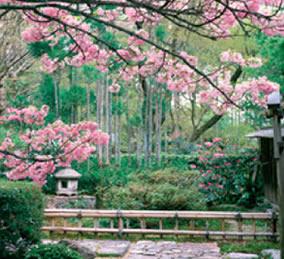 画像:4月 宝泉院(京都) 庭の詩情 2017年版カレンダー