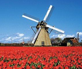 画像:写真「オランダアムステルダム近郊の風車とチューリップ」/3-4月 世界の名勝(フィルムカレンダー・小) 2017年版カレンダー