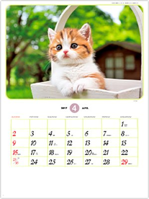 画像:4月 マンチカン リトルフレンド 2017年版カレンダー