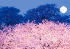 画像:3-4月 Pure~癒しの日本風景 2018年カレンダー
