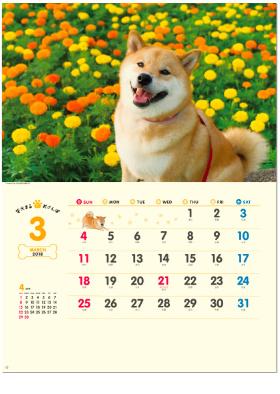 画像:3月 柴犬まるとおさんぽ 2018年カレンダー