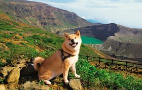 画像:9月 柴犬まるとおさんぽ 2018年カレンダー