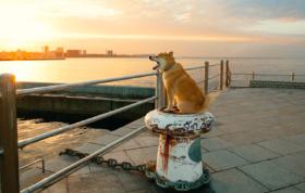 画像:12月 柴犬まるとおさんぽ 2018年カレンダー