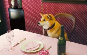 画像:5月 柴犬まるとおさんぽ 2018年カレンダー
