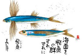 画像:9月 魚彩時記 2018年カレンダー
