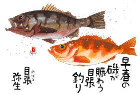 画像:3月 魚彩時記 2018年カレンダー