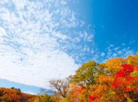 画像:11月 秋空に広がる紅葉 SORA -空- 2018年カレンダー