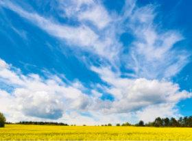 画像:3月 菜の花畑と白い雲 SORA -空- 2018年カレンダー